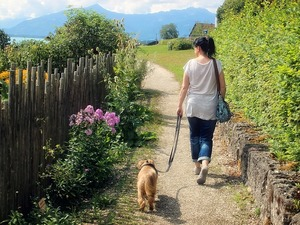 walk_your_dog_to_better_health